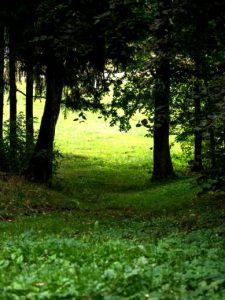 Экологически чистая территория - польза для здоровья